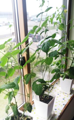 窓上ジャングル!!