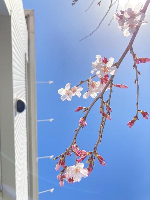 カネタ建設|上越市|新築住宅|注文住宅|春|新入社員|